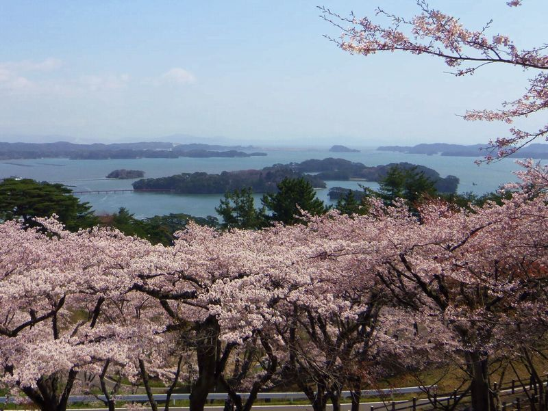日本三景・松島を見下ろす桜の名所!西行戻しの松公園