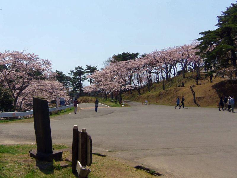 松島で桜を楽しむなら〜西行戻しの松公園