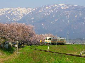 樹齢千年の長寿桜4本を巡る~山形鉄道沿線・置賜さくら回廊|山形県|トラベルjp<たびねす>