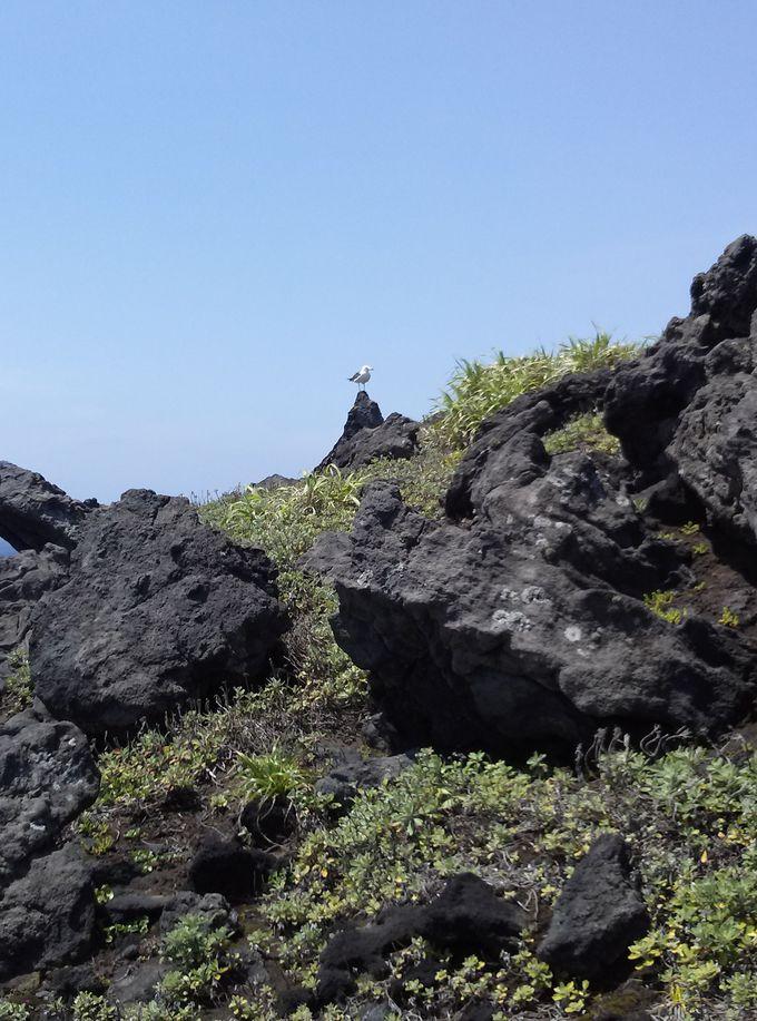小島の自然