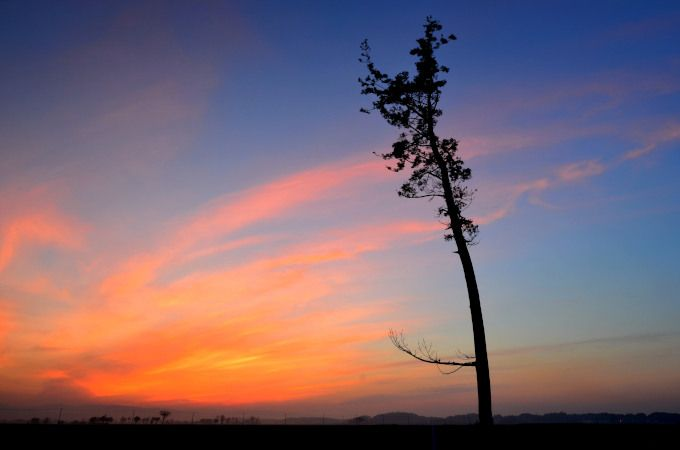 復興祈願。福島県南相馬「奇跡の一本松」に祈りを捧ぐ
