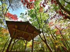 庭も逸品!茶席体験も歴史的逸品!新潟県「木村茶道美術館」|新潟県|トラベルjp<たびねす>