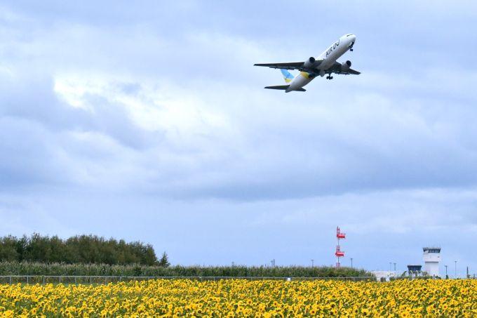 ひまわりの見頃、飛行機の見頃