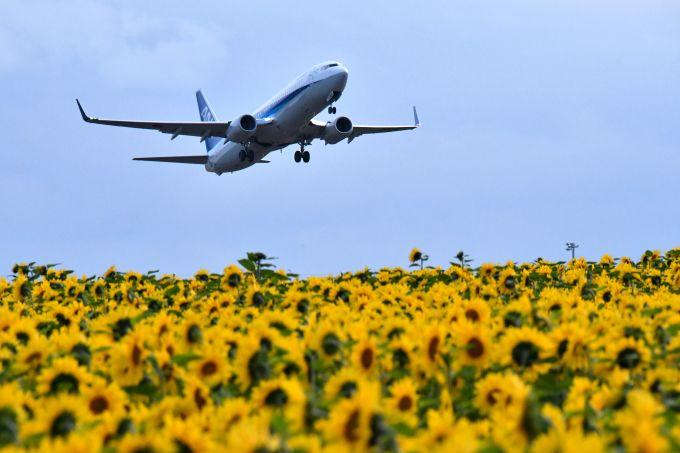 ひまわり畑に巨体が飛来?ヒコーキをラブリーに撮る「女満別空港」