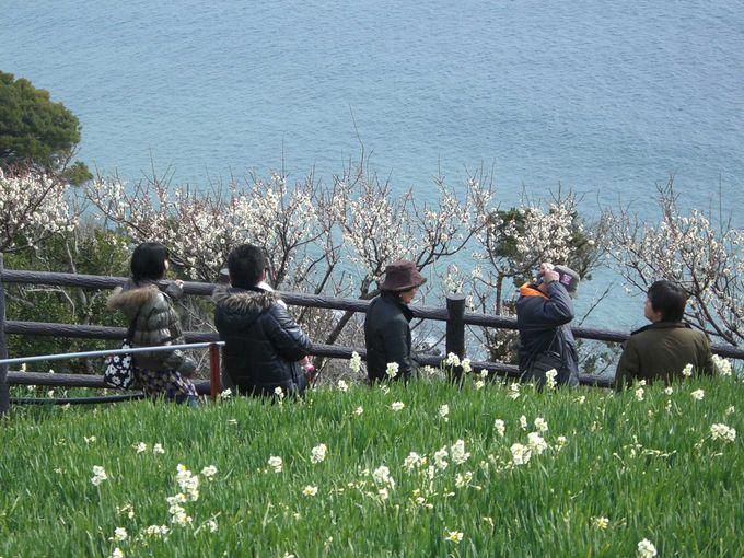 淡路島は、花の島と呼ぶにふさわしい