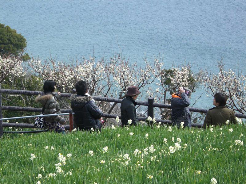淡路島・灘黒岩水仙郷で早春の香りに包まれて