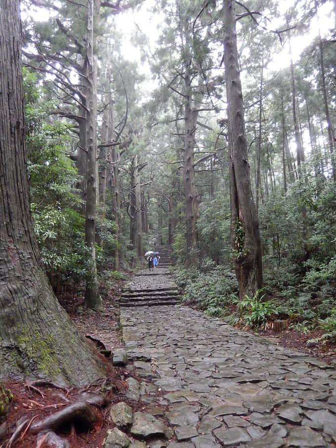 熊野古道の美しい姿を残す『大門坂』から『大雲取越え』に挑戦!