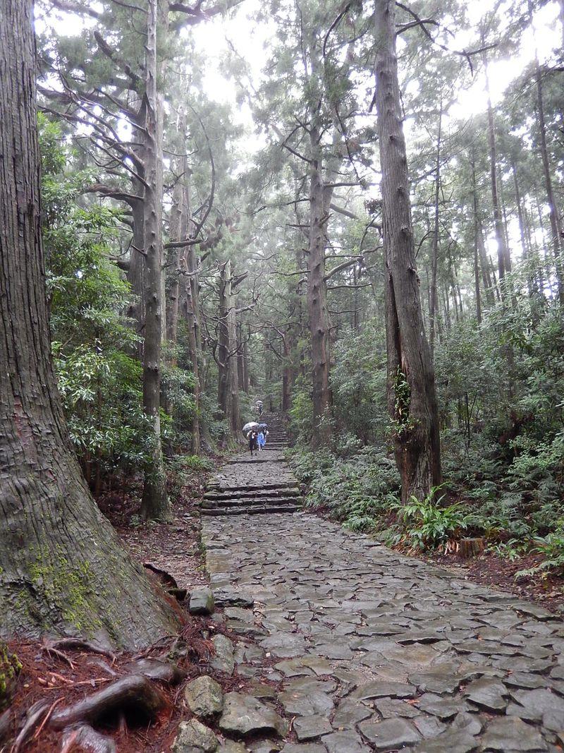 世界遺産・熊野古道最大の難所『大雲取越え』にチャレンジ! 那智勝浦で熊野古道の神髄を満喫しよう!
