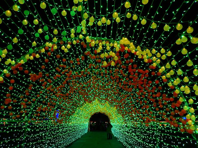 フルーツフラワーパークならではの『HIKARIのトンネル』