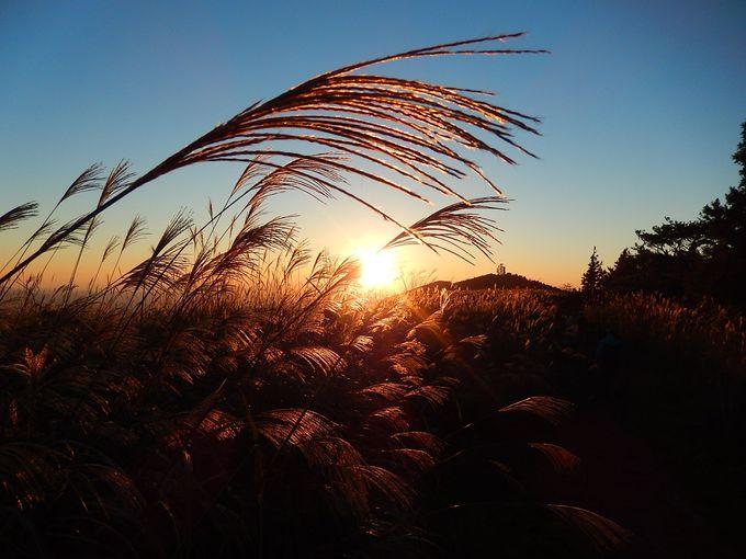 夕陽に広がる雄大なススキのさざ波「生石高原」