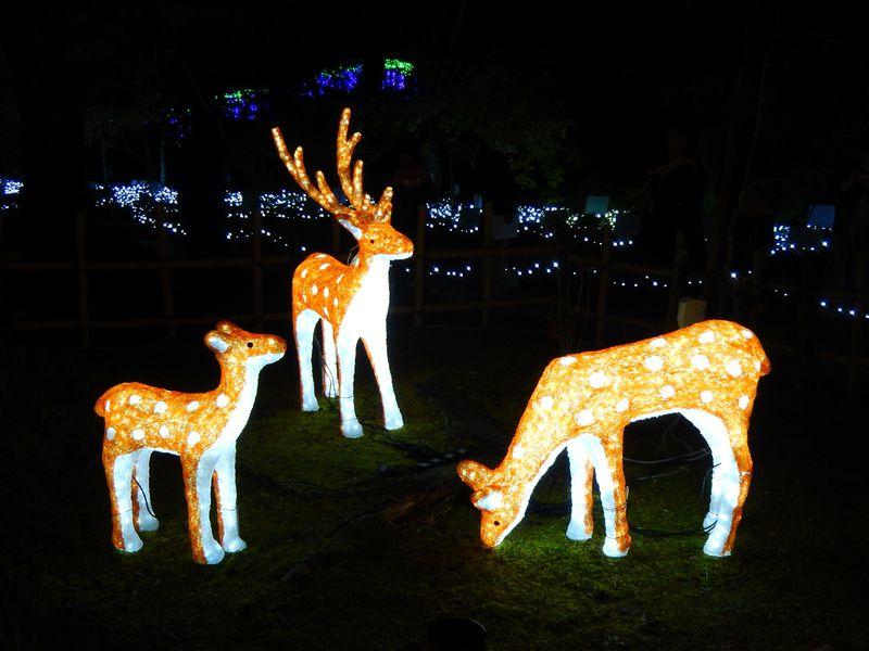 光る鹿がお出迎え!『イルミ奈〜ら』で古都・奈良の夜を楽しもう