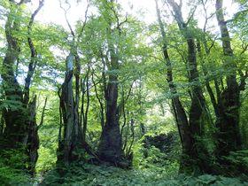 本当の深呼吸が出来る!岐阜・天生の森のカツラの門と籾糠山|岐阜県|トラベルjp<たびねす>
