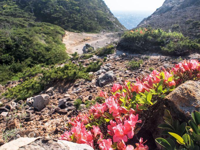 荒涼とした岩場にひっそり咲くツツジ