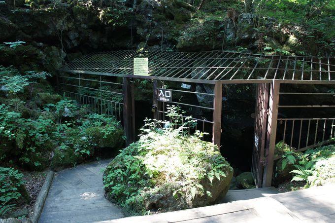 コウモリ保護の檻に囲まれた入口