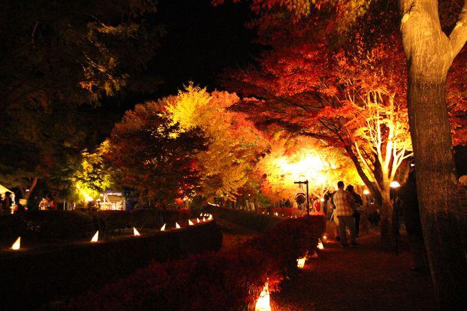 紅葉祭り期間中はもみじ回廊のライトアップも!
