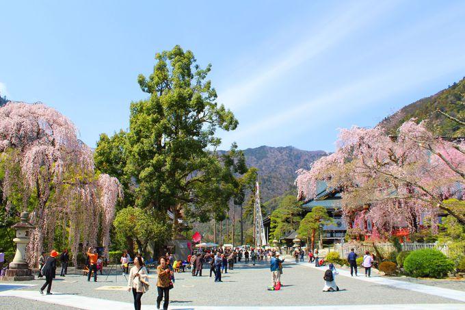 法華宗の総本山で桜の観賞