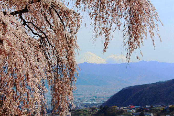 丘の上からは富士山も!