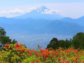 レンゲツツジに富士山と甲府盆地の絶景!山梨・甘利山