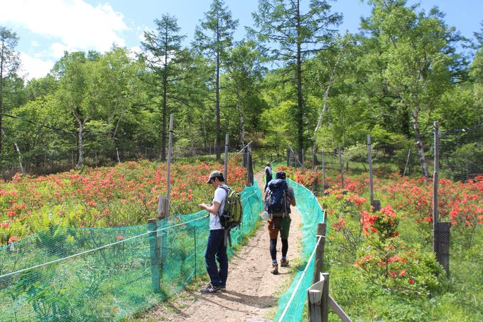 甘利山はハイキング感覚で登れる気軽な山!