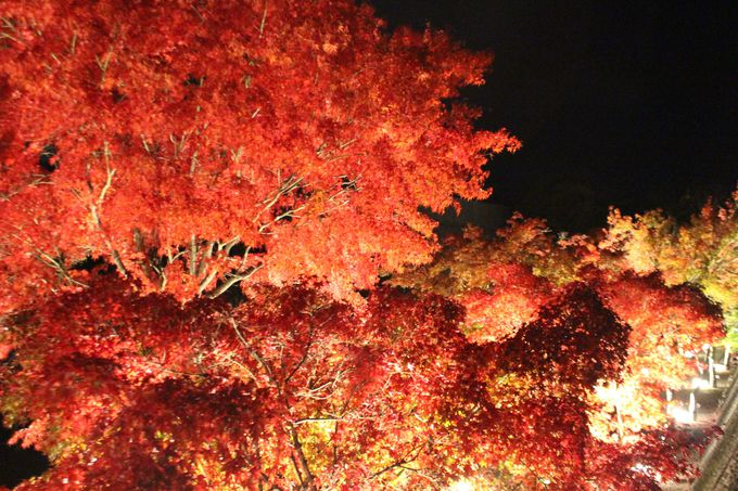 上からのぞくと見える赤く染まった紅葉の道
