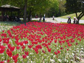 うどんだけじゃない香川県!国営讃岐まんのう公園で四季を味わう