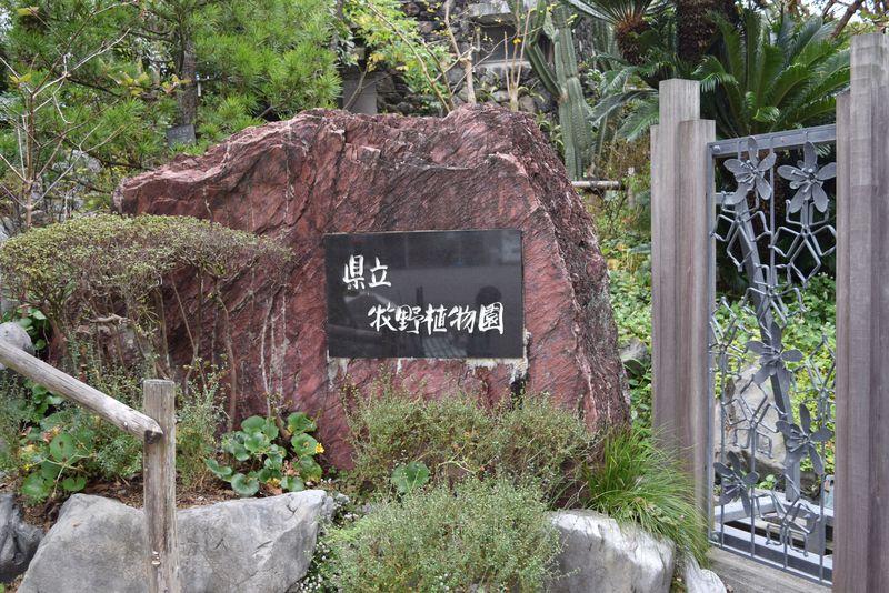 土佐ゆかりの草花に出会える♪「高知県立牧野植物園」で四季を楽しもう!