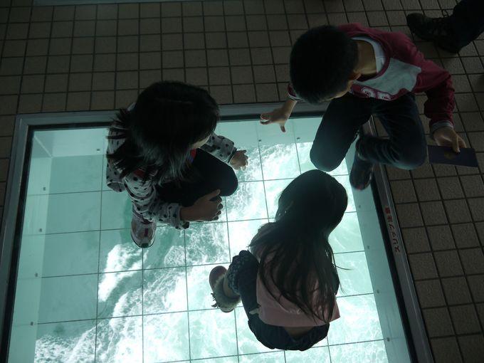 最初は怖がっていたちびっこ達は、ガラスの下に釘付けに!!