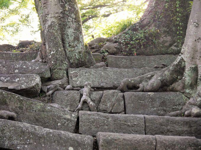 和歌山のシンボル!紀州徳川家の「和歌山城」