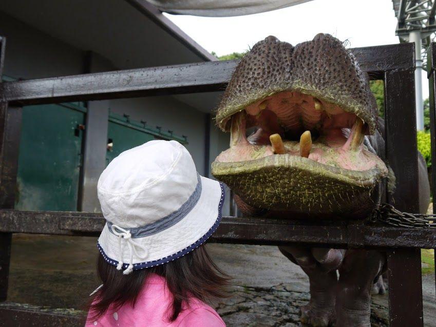 エサやりは大迫力!!!まるで恐竜に餌をあげる気分に・・・