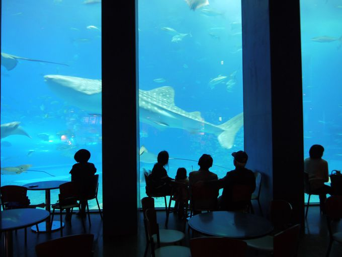 2日目:「沖縄美ら海水族館」は朝一で訪れると快適