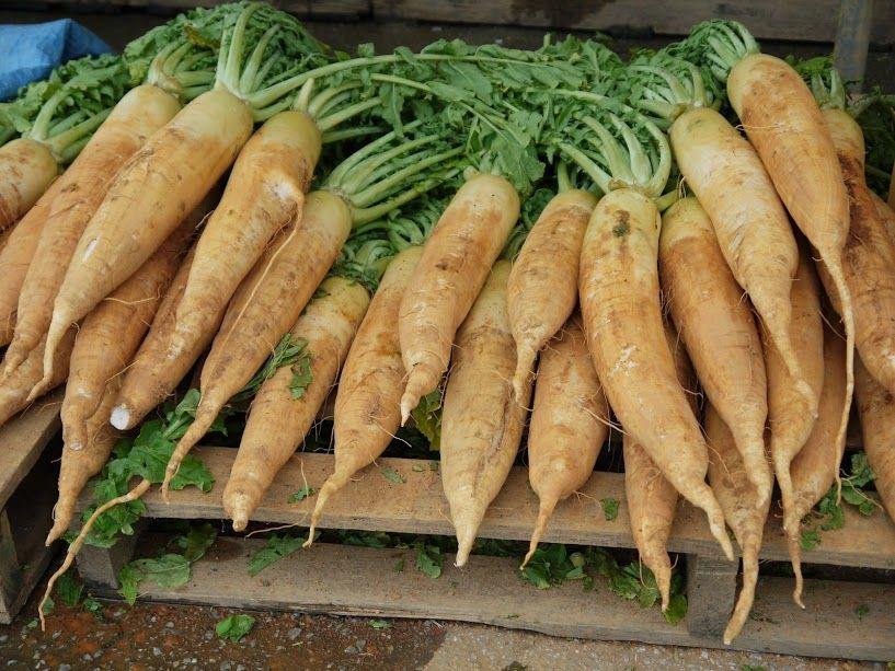 赤土大根が人気♪沖縄新鮮野菜と果物が安い「道の駅おおぎみ」
