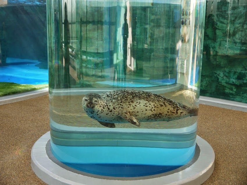 チューブ状の水槽で楽しそうに泳ぐアザラシが可愛い!