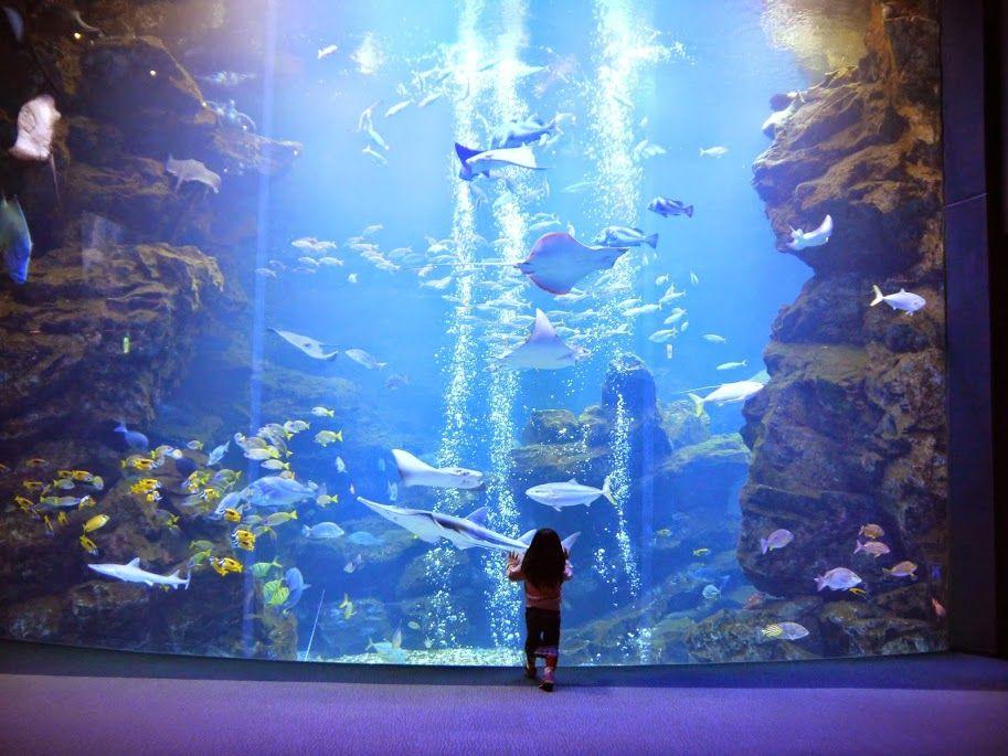 京都水族館の大水槽を独占して見たい場合は…!!