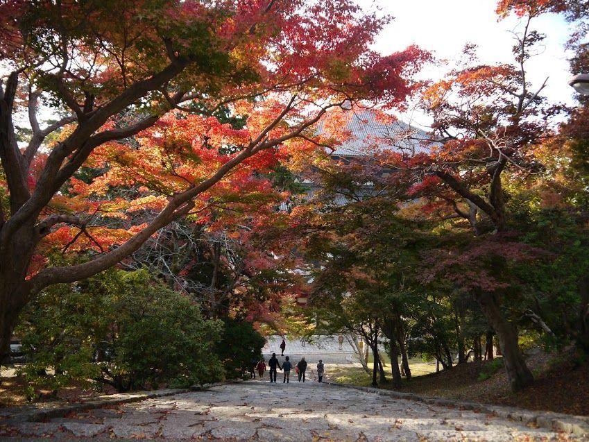 奈良・東大寺から二月堂、手向山八幡宮の紅葉でのんびり♪