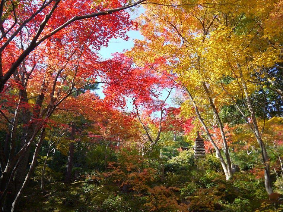 常寂光寺は、赤、朱、薄紅、オレンジ、黄色、緑と色鮮やか!!