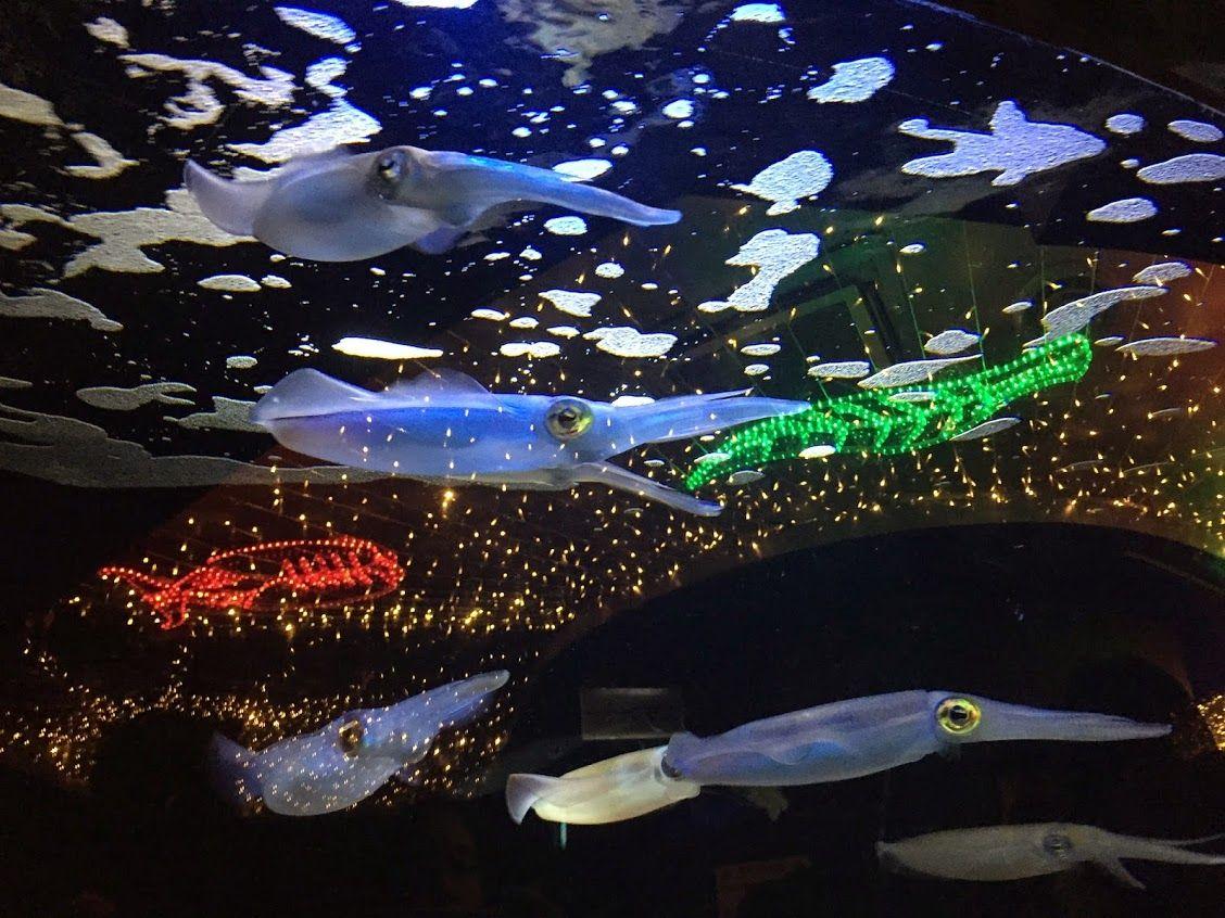 夜の水族館はイカの泳ぐ姿がとても幻想的!