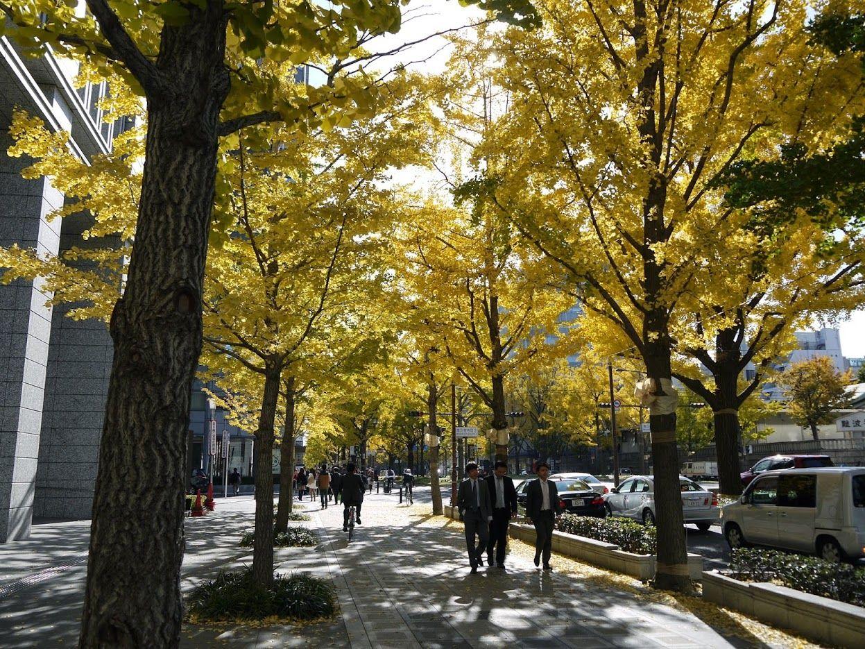 御堂筋いちょう並木の紅葉&ギネス認定のイルミネーション