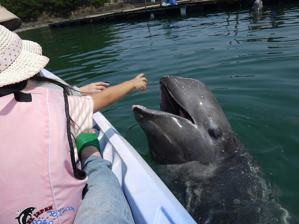 ここまで近づいて大丈夫?クジラと急接近で触れ合えます