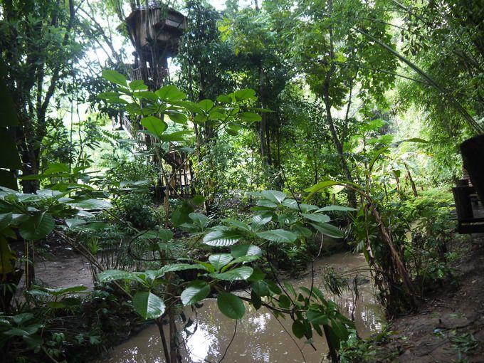 大自然に囲まれた素晴らしい環境で過ごす魅力