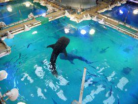 水族館の舞台裏ってドラマチック!海遊館バックヤードツアー|大阪府|トラベルjp<たびねす>