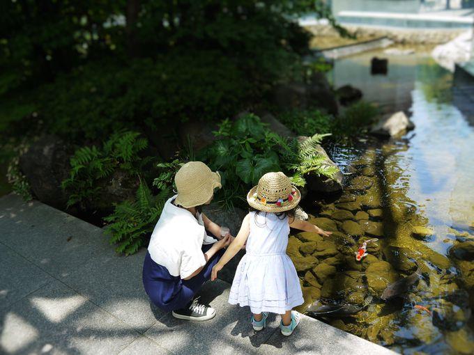 夏の家族旅行は、都会のど真ん中で自然を満喫!