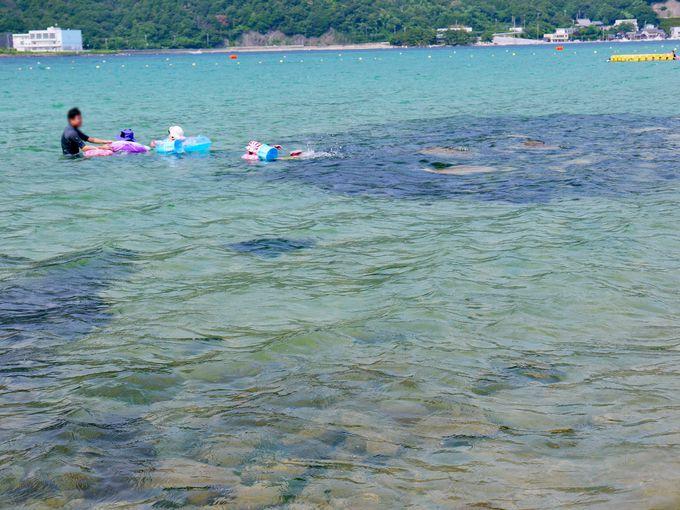 透明度抜群の海はシュノーケリングがおすすめ!