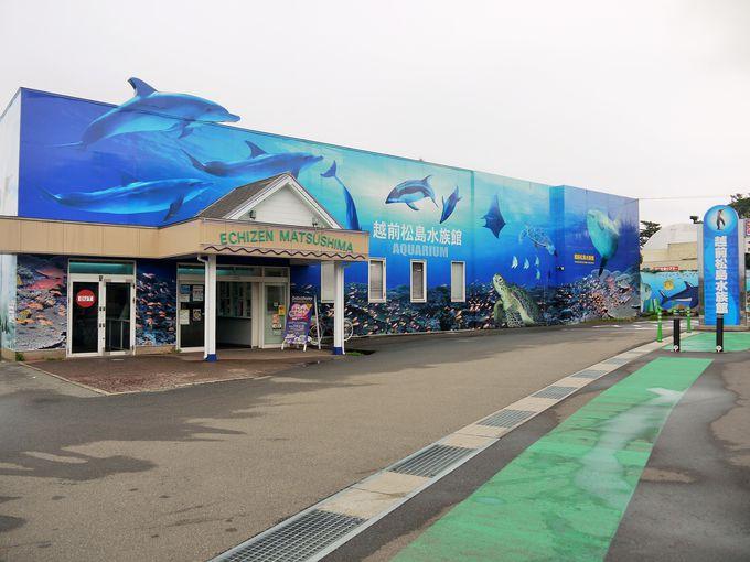 みて・ふれて・楽しく学べる!越前松島水族館