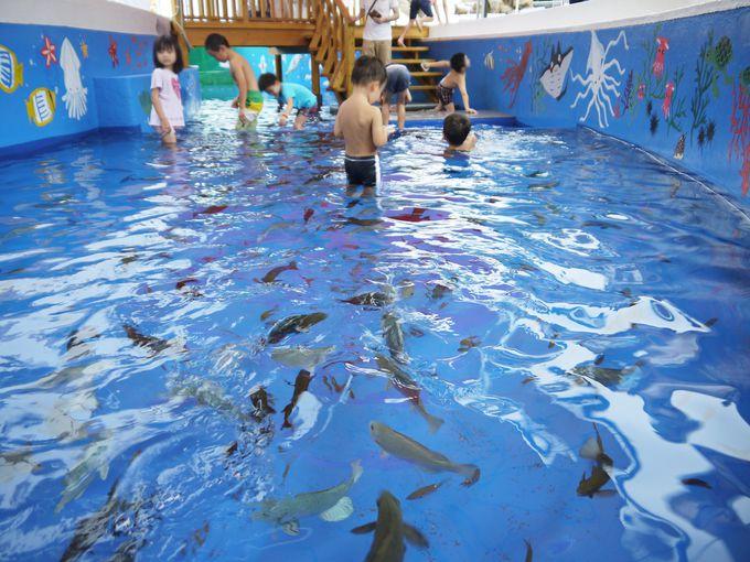 海水プールで泳ぐ魚たちは約20種類で約1,000匹も!