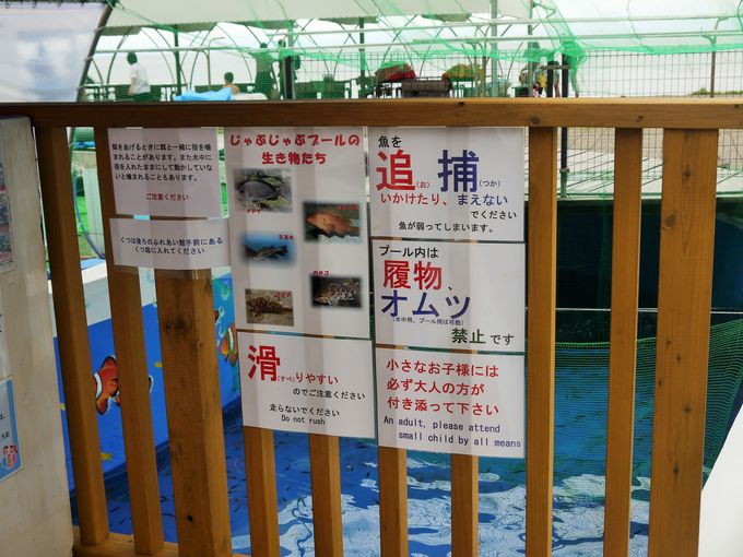 越前松島水族館にある「じゃぶじゃぶ海水プール」