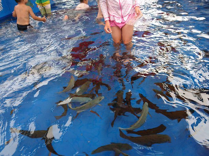 魚たちは知っている!誰がエサを持っているのかを…。
