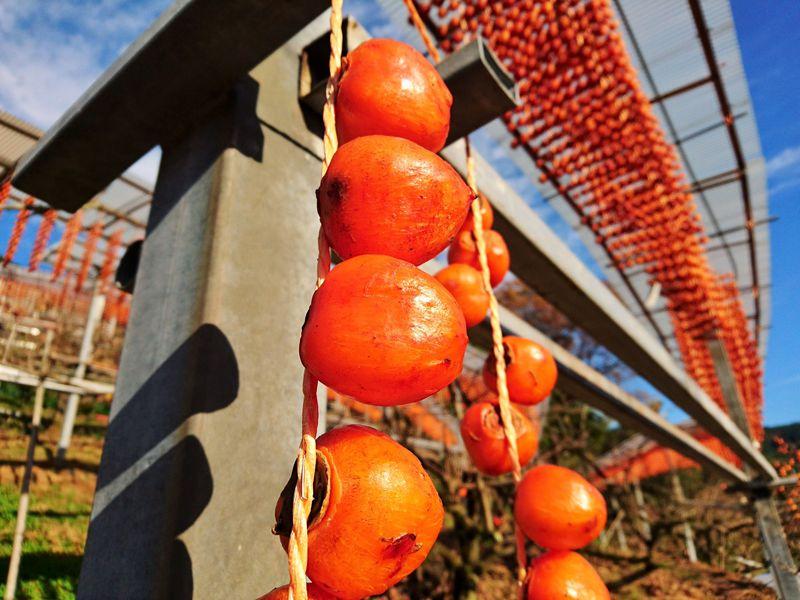 串柿の里で和む!和歌山県の四郷・柿色に染まる山里の原風景