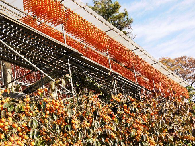 山里一面がオレンジ色に染まる見事な日本の原風景