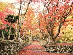 まるで紅の絨毯!鶏足寺は知る人ぞ知る滋賀の絶景紅葉スポット