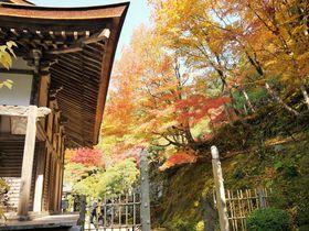 信長が焼討した百済寺は「地上の天国」と称された滋賀の名刹